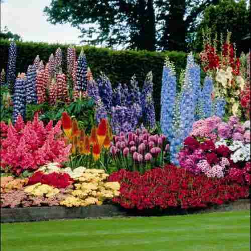 Why a perennial garden is a great home addition aden for Beautiful flower beds
