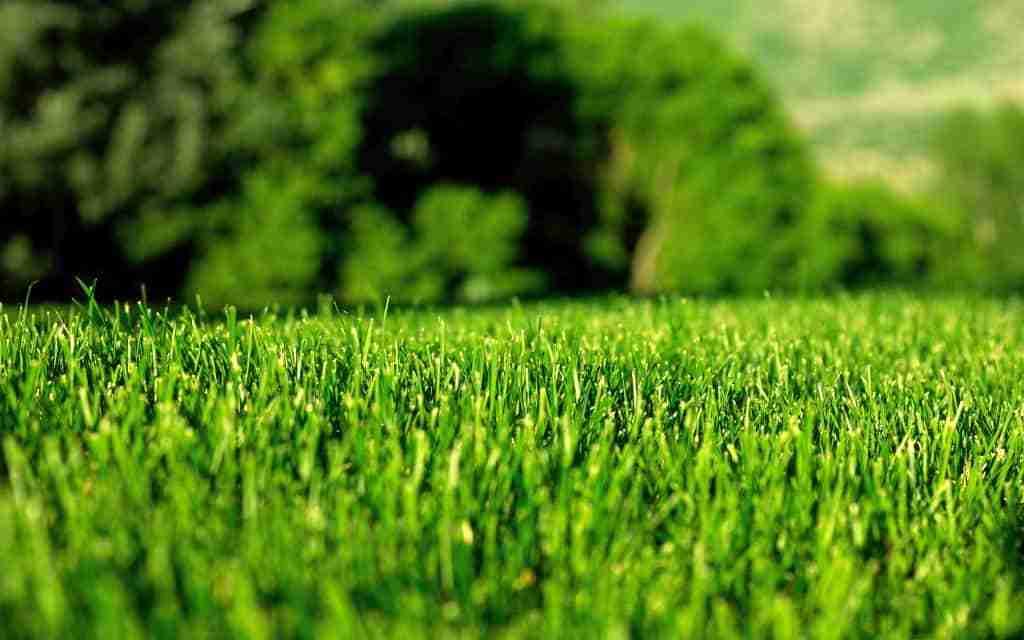 green-lawn
