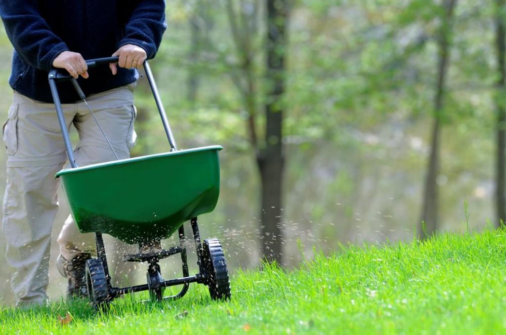fall-lawn-maintenance