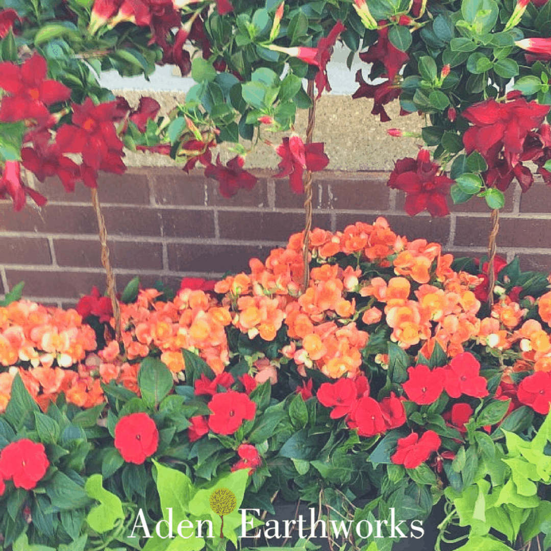 9 beautiful plants and flowers to add to your summer planters beautiful summer colours in a planter featuring tuberous orange begonias red million bells lime izmirmasajfo
