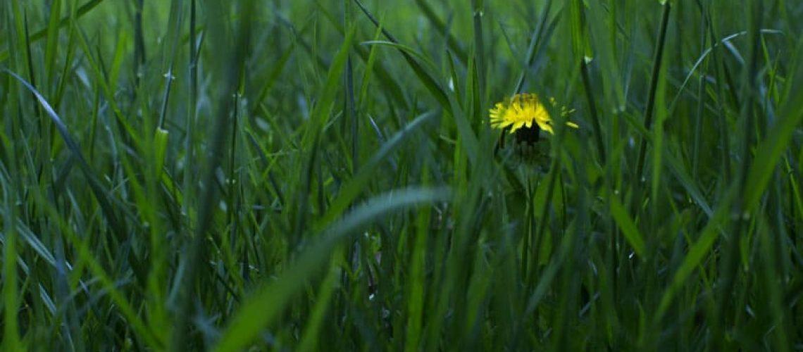 grass aden long weekend project